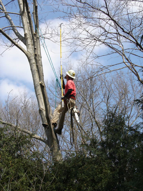 Commercial tree services rendered in Rochester, MN