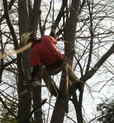 Hathaway profession tree services